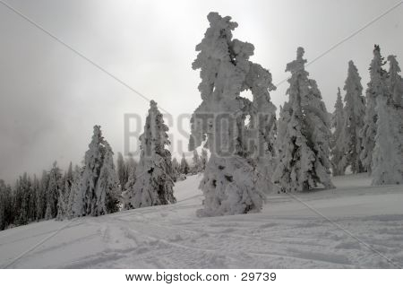 Mystic Light On Snowy Trees