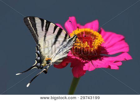Butterfly Sitting On flower