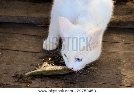 Gato comendo um peixe