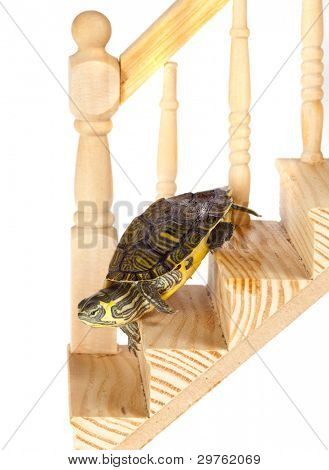 Green turtle going down on a wooden staircase