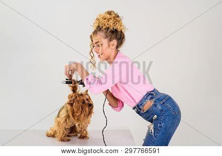 poster of Vet. Pet Salon. Petshop. Beauty Salon For Animals. Dog Salon. Grooming. Grooming Master Making Dog H