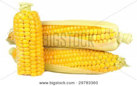 Corn On The Cobs