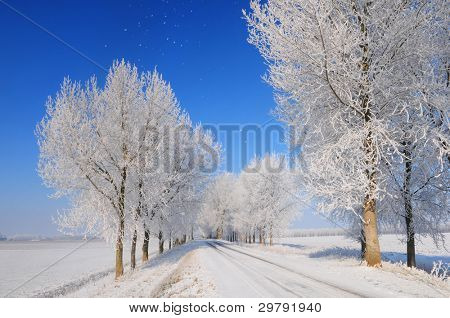 Fairytale winter landscape in dutch polder