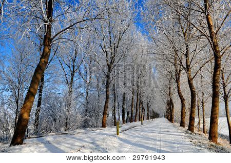 Snowy road with frozen trees in dutch polder landscape