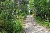 Photo Paths In The Forest In The Urals Of Russia.forest In The Highlands Of The Perm Region.the Path poster