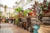 Beautiful Natural Background Of Indoor Plants, Greenhouses. Urban Jungle, A Place For Rest And Relax poster