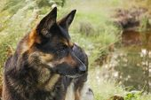 Canine Profile On A Forest Background. Live Color Without Processing poster