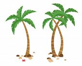 Vector Set Of Colorful Palm Tropical Trees Isolated On White Background. With Crab, Shells And Stone poster