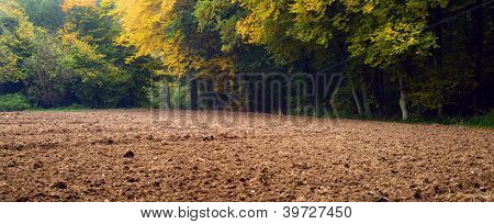 Plowed Field And Forest