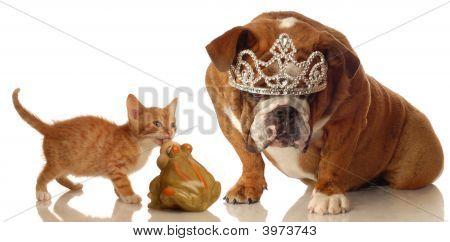 Bulldog y gatito