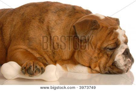 Bulldog Protecting Dog Bone