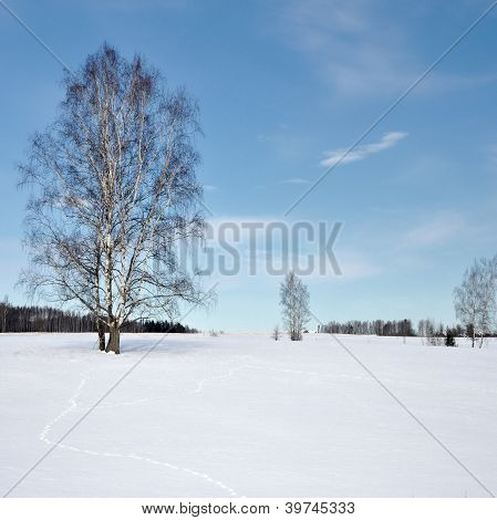 Frozen Trees In Field