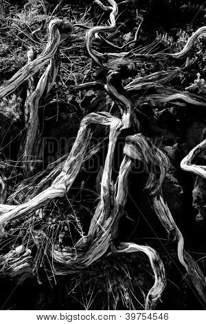 Dried branches over soil in La palma Caldera de Taburiente at Canary islands
