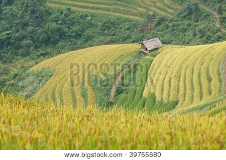 Rice Terraces And Cottage In The Mountains