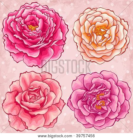 Hand drawn style garden roses
