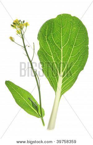 Bok Choy (Brassica rapa chinensis)