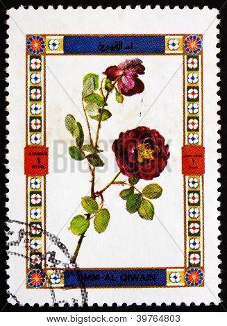 Postage stamp Umm al-Quwain 1972 Rose, Flower