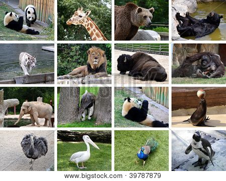 Animals collage