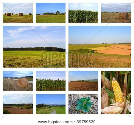 Rural landscapes collage