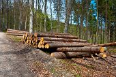 stock photo of afforestation  - Dirt Road Leading to the Stack of Firewood - JPG