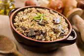stock photo of champignons  - A bowl of wild mushroom risotto rice against a background of freshly picked wild boletus mushrooms - JPG