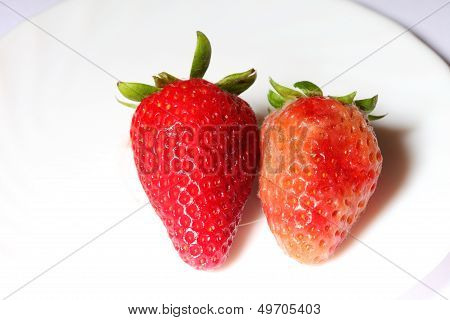 Healthy And Rotten Spoiled Bad Red Strawberries