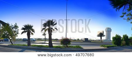 Palms and ways of Jeddah