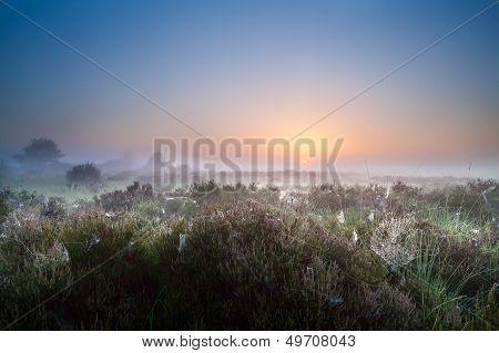 Misty Sunrise Over Heather Meadows