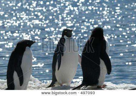 Antarcticacuvervilleisland