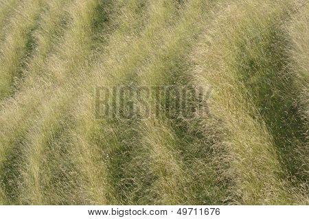Patterns In Grassy Hillside. Wiltshire. UK