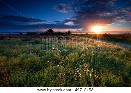 Sunbeams Over Swamps