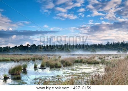 Mist Over Swamp In The Morning