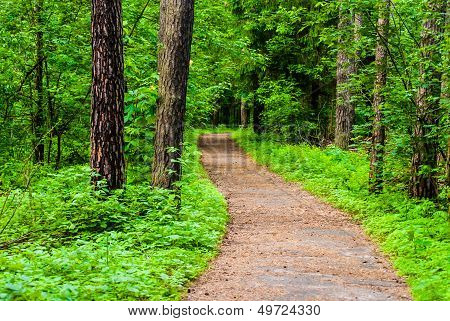Path In Woods