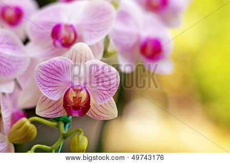 White orchid in the green garden