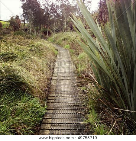 Boardwalk in New Zealand landscape