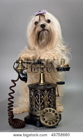 Bolonka ZWETNA with telephone
