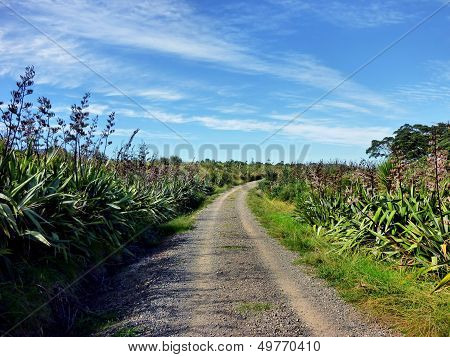 Rugged Road Through Bush Vegetation