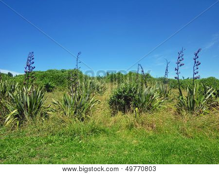 Flax Plants In Front Of A Landscape With Bushes