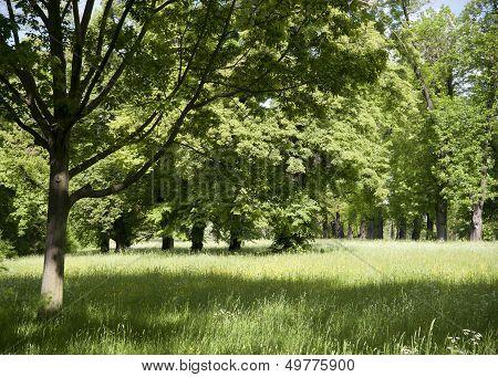 Luscious Nature