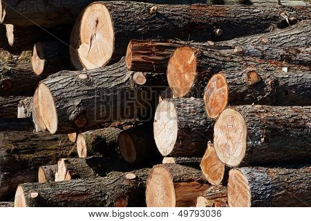 Tree Timber Trunks