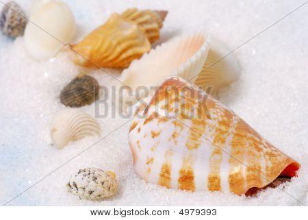 Seashells And White Sand