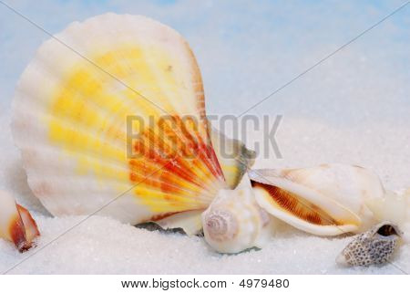 Colorful Seashells On White Sand
