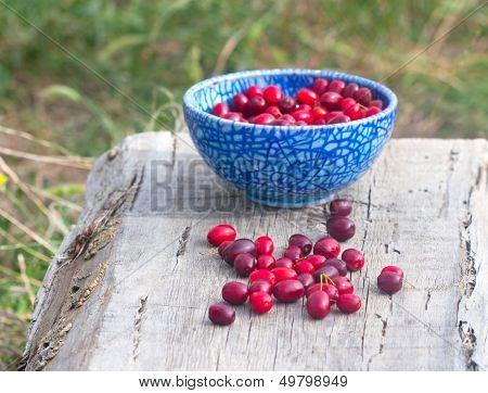 Blue Full  Plate Cornelian Cherries