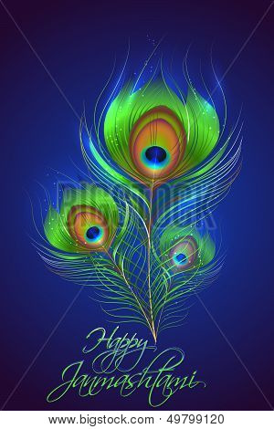 Peacock Feather in Janmashtami Background