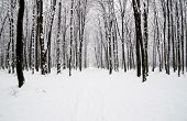 picture of snow forest  - beautiful winter forest  and the road - JPG
