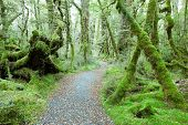 foto of temperance  - Temperate rain forest - JPG
