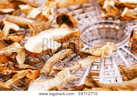 dry dried mushrooms on food dehydrator tray, shallow dof