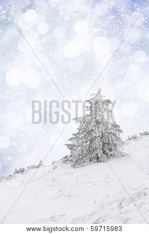Snow covered tree on a slop