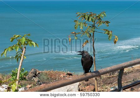 The Raven Sits On A Pipe Against The Sea