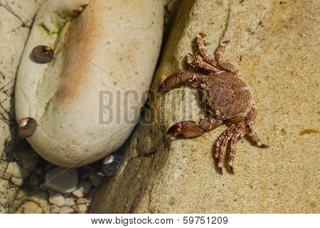 crabs on the rocks